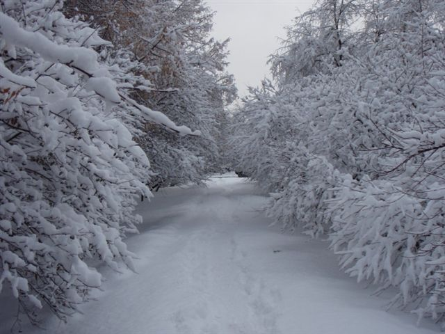 snow-covered-path
