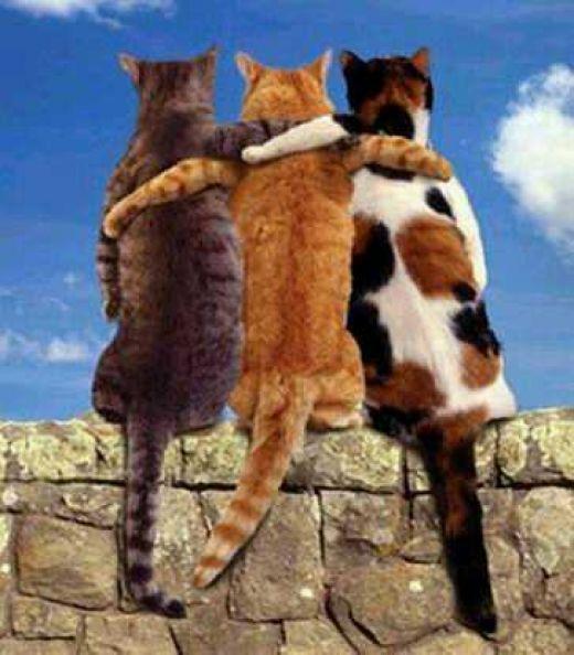 friend-cats2