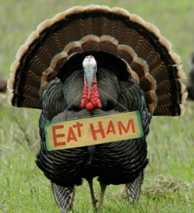 turkey(40)